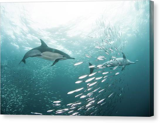 Water Canvas Print - Dolphins by Alexander Safonov