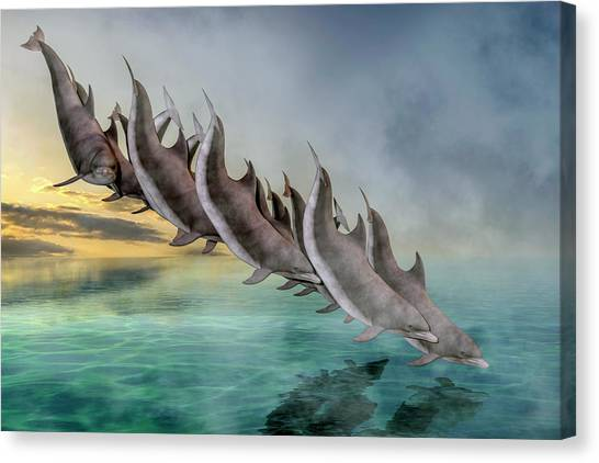 Carribbean Canvas Print - Dolphins by Betsy Knapp