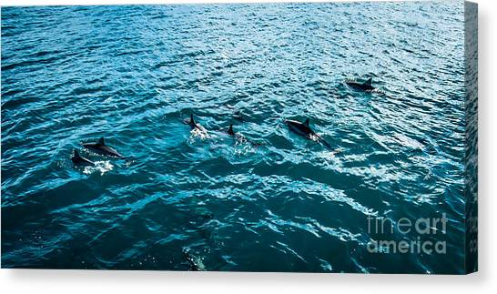 Dolphins Off Of The Na Pali Coast Canvas Print