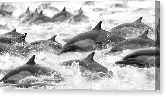 Dolphins Canvas Print - Dolphins On The Run by Steve Munch