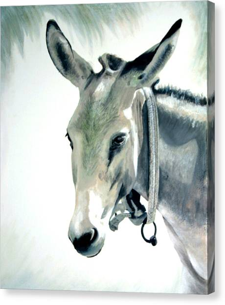 Donkey Canvas Print by Fiona Jack