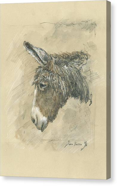 Donkeys Canvas Print - Donkey Portrait by Juan Bosco