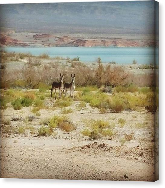 Donkeys Canvas Print - #donkeys #donkeysinthedesert by Angela Curtis