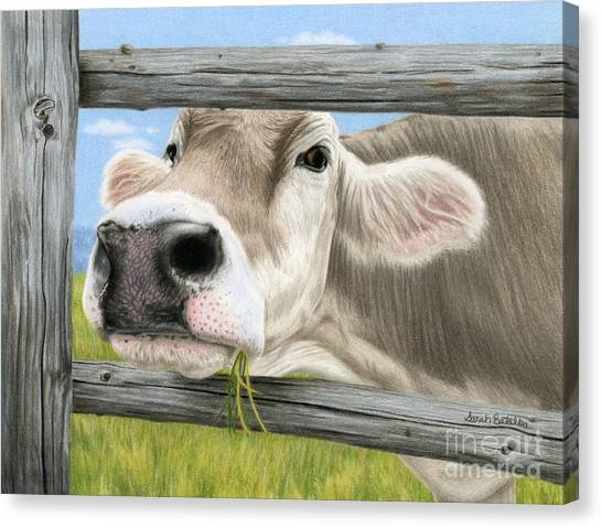 Cow Farms Canvas Print - Don't Fence Me In by Sarah Batalka