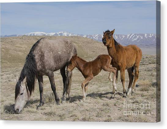 Don't Worry Mom I Got This... Canvas Print by Nicole Markmann Nelson