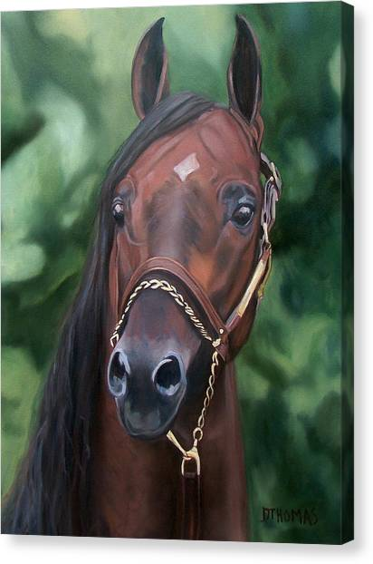 Equestrian Canvas Print - Dont Worry Saddlebred Sire by Donna Thomas