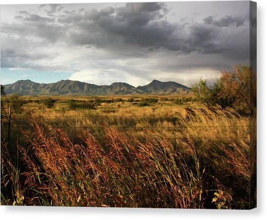 Dos Cabezas Grasslands Canvas Print