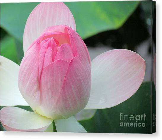 Dotus On The Lotus  Canvas Print