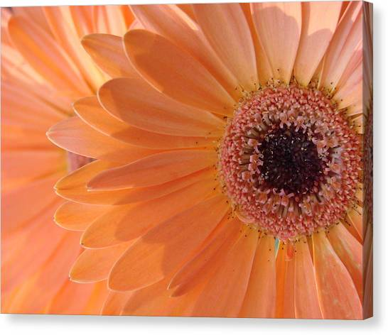 Double Delight Canvas Print