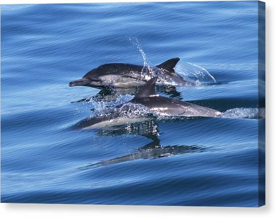 Double Dolphins And Reflections Canvas Print