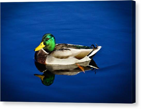Double Duck Canvas Print