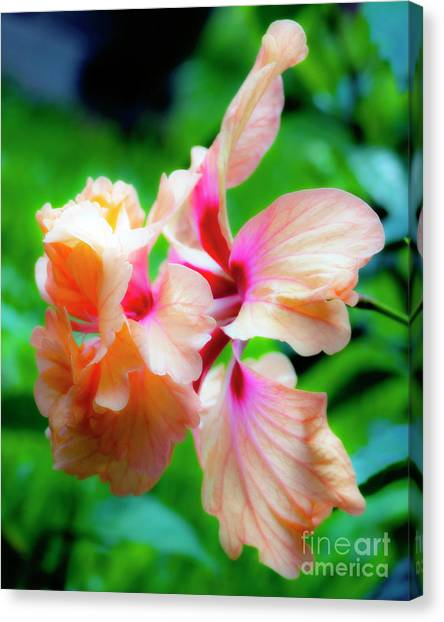 Double Peach Hibiscus Two Canvas Print