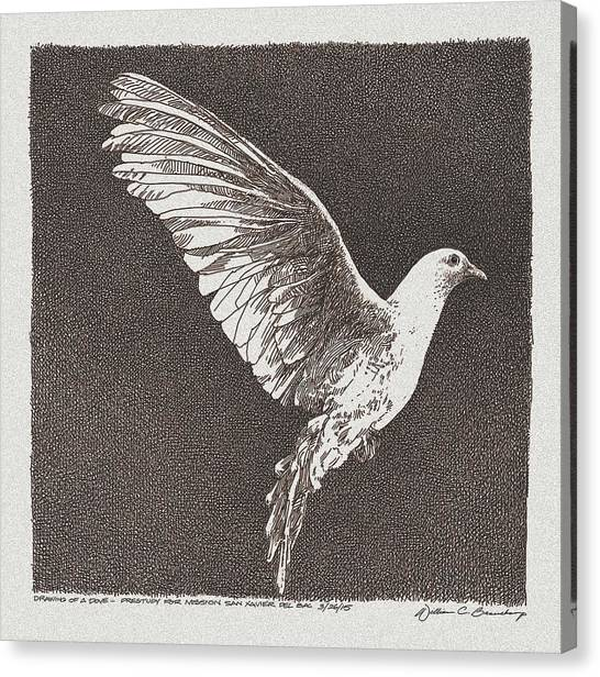 Dove Canvas Print - Dove Drawing by William Beauchamp