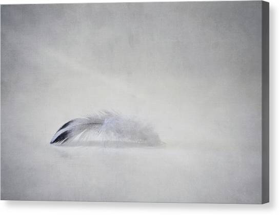 Flight Canvas Print - Down Feather by Scott Norris