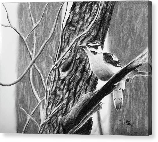 Downy Canvas Print