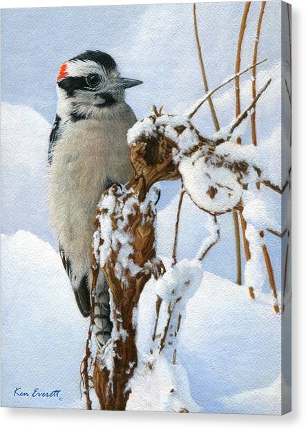 England Artist Canvas Print - Downy Woodpecker  by Ken Everett