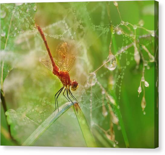 Susan Canvas Print - Dragonfly Dance by Susan Capuano