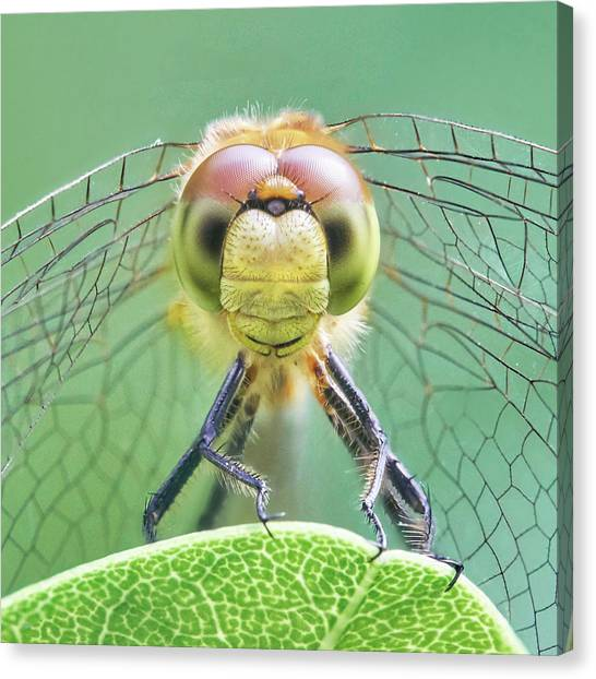 Dragonfly Face Canvas Print by Jim Hughes