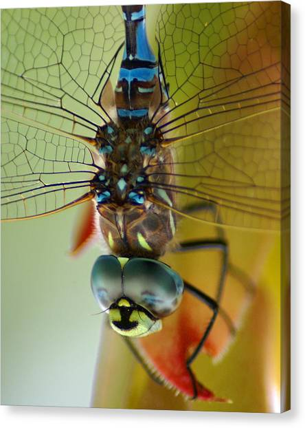 Canvas Print featuring the photograph Dragonfly In Thought by Ben Upham III