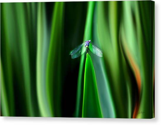 Dragonfly Meditation Canvas Print