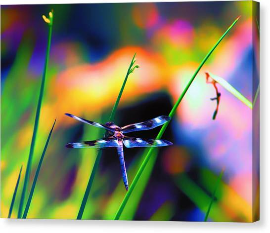 Dragonfly On Pastels Canvas Print by Bill Tiepelman