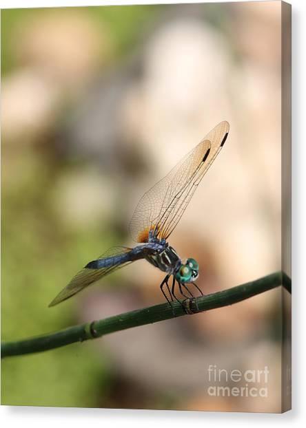 Dragonfly Ref.13 Canvas Print by Robert Sander