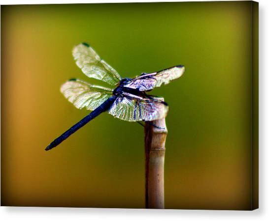 Dragon Fly Canvas Print - Dragonfly by Susie Weaver