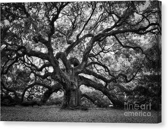 Dramatic Angel Oak In Black And White Canvas Print