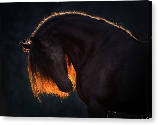 Drawn From The Darkness Canvas Print