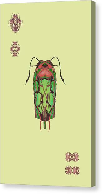 Dread Bug Specimen Canvas Print