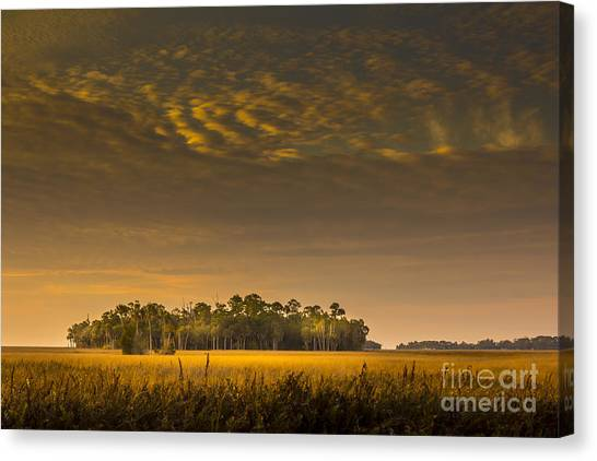 Marsh Grass Canvas Print - Dream Land by Marvin Spates