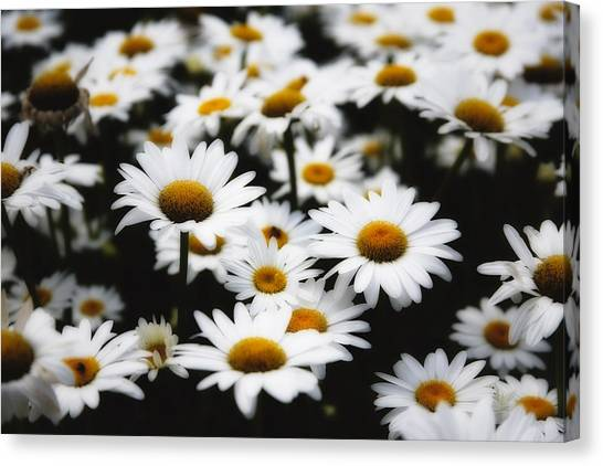 Dreaming Daisies Canvas Print by George Oze