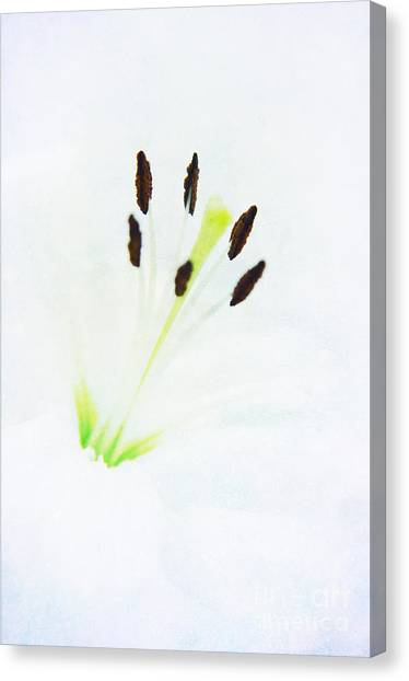Dreaming Lilith Canvas Print