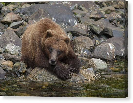 Bear Claws Canvas Print - Dreaming Of Salmon by Tim Grams