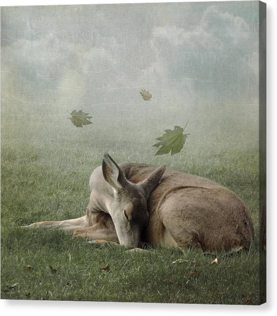 Dreamland Canvas Print