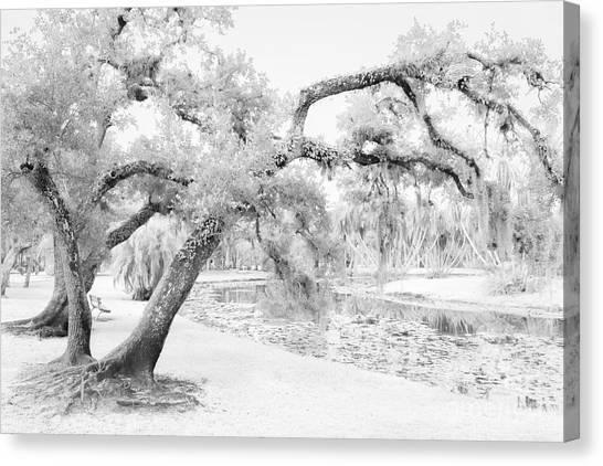 St. Lucie County Canvas Print - Dreams Without Color by Liesl Walsh