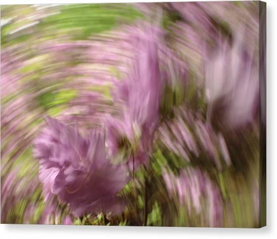 Dreamy Azaleas Canvas Print
