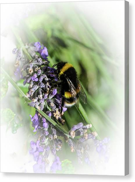 Dreamy Bumble Bee Canvas Print