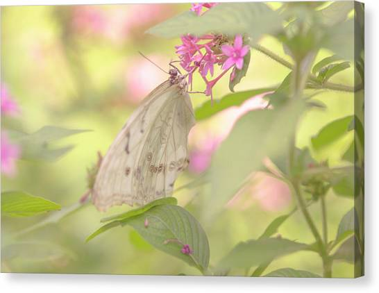 Dreamy Butterfly Canvas Print