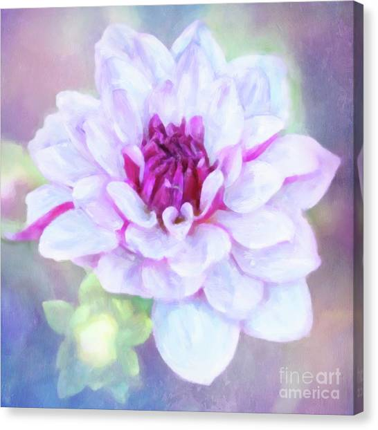 Dreamy, Delightful Dahlia Canvas Print