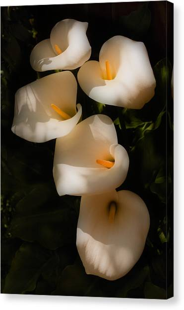 Calla Canvas Print - Dreamy Lilies by Mick Burkey