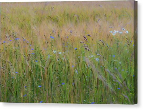 Dreamy Meadow Canvas Print