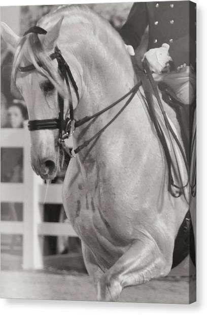Dressage Perfection Canvas Print by JAMART Photography