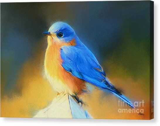 Dressed In Blue Canvas Print