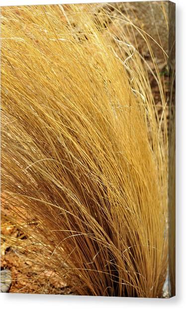 Dried Grass Canvas Print