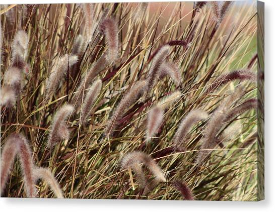 Dried Grasses In Burgundy And Toasted Wheat Canvas Print