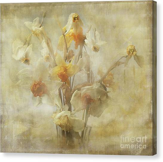 Dried Narcissus Canvas Print