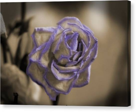 Dried Rose In Sienna And Ultra Violet Canvas Print
