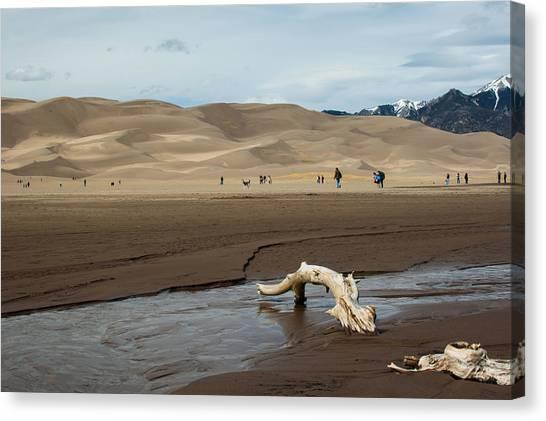 Drift Wood And Dunes Canvas Print