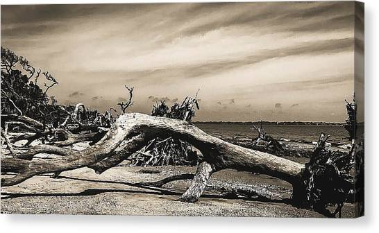 Canvas Print - Driftwood 3 by Elijah Knight